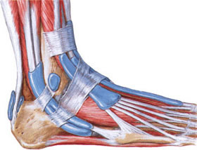 The tendon sheath ankle - the typical place of appearance tenosynovitis.